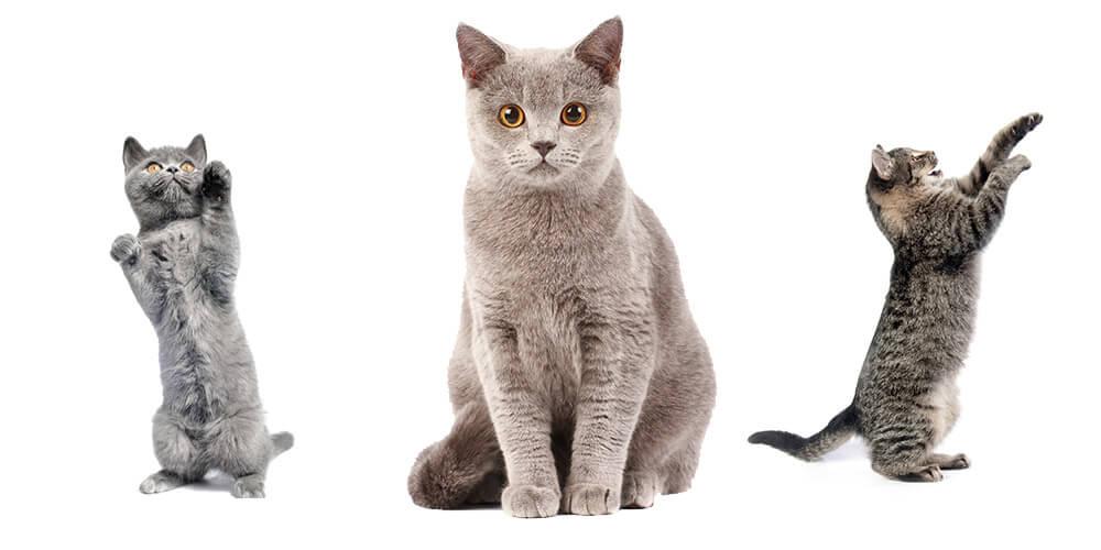 all-cats-header
